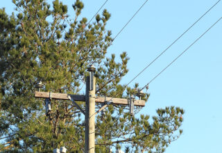 Test Your Power Line Safety Knowledge