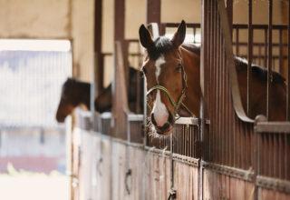 Barn Safety Checklist