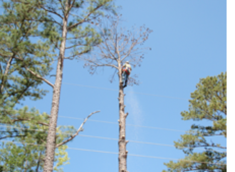 Sam Houston EC Steps Up Dead Tree Removal